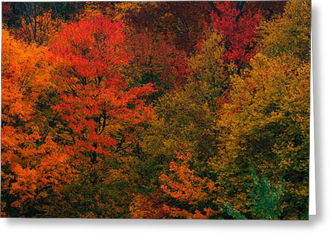 These Shows The Autumn Colors Greeting Card