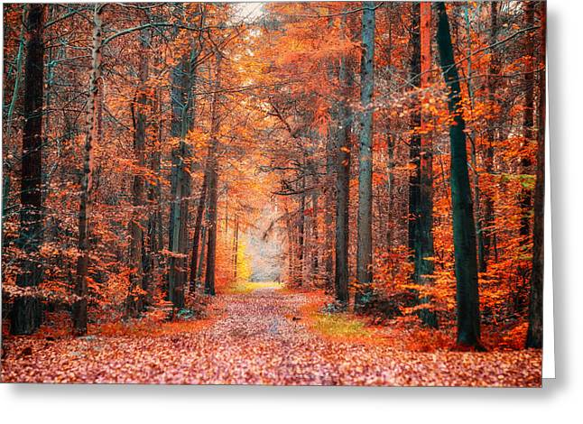 Thetford Forest Greeting Card