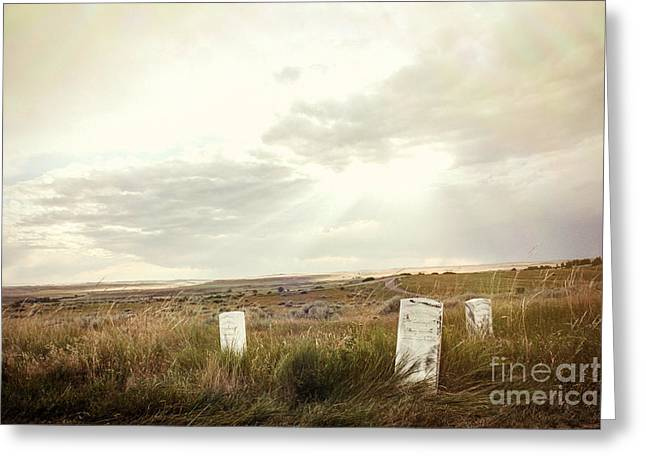 They Stand Alone Greeting Card by Sandy Adams