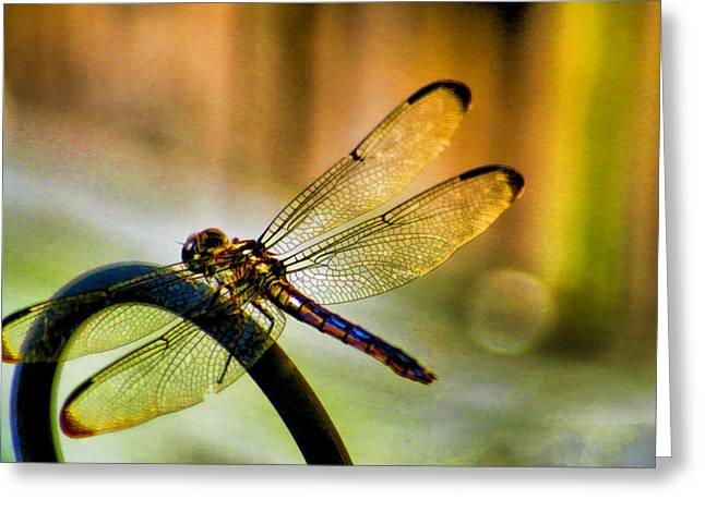 Iridescent Wings  Greeting Card