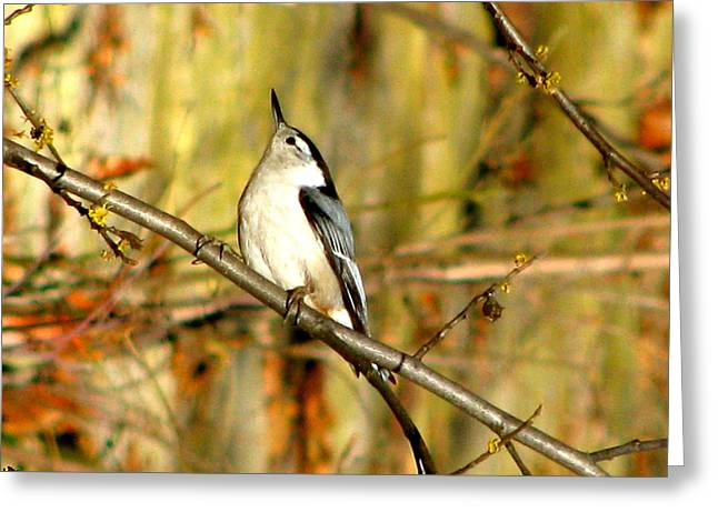 Bird On The Ground Greeting Cards - Things Are Looking Up Greeting Card by Debra     Vatalaro