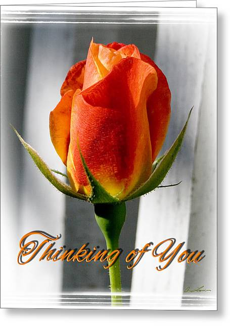 Thinking Of You, Rose Greeting Card