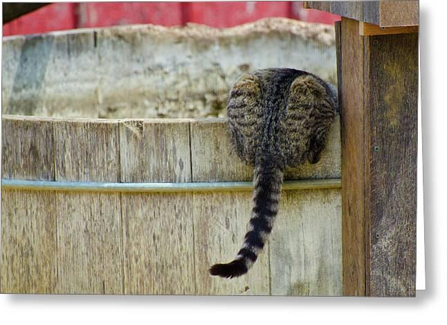 Thirsty Barn Cat Greeting Card