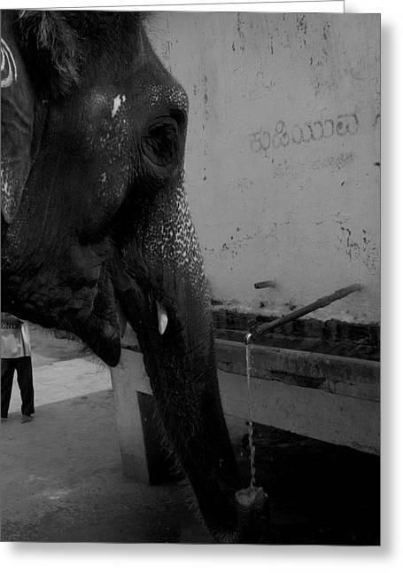 Thirsty Elephant Greeting Card by Deepak Pawar