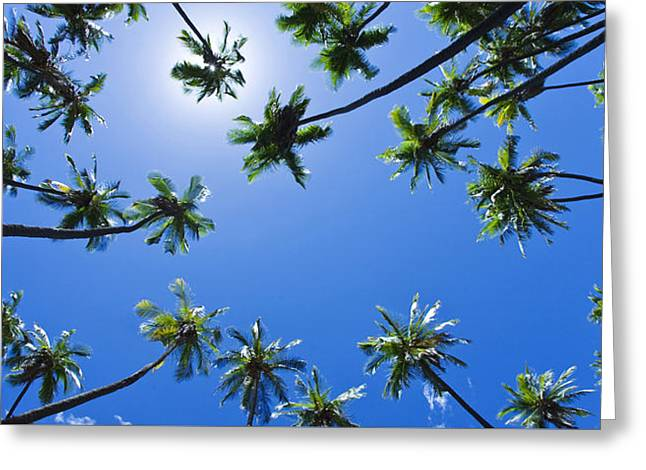Palms Overhead Greeting Card by Sean Davey