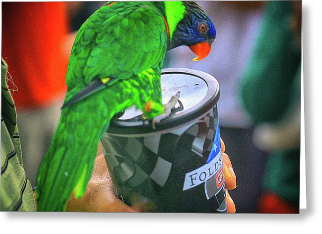 Thirsty Parrot Greeting Card by Dennis Baswell