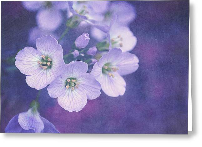 Lilac Flower Greeting Cards - This enchanted evening Greeting Card by Lyn Randle