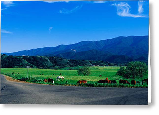 This Is A Country Intersection Greeting Card by Panoramic Images