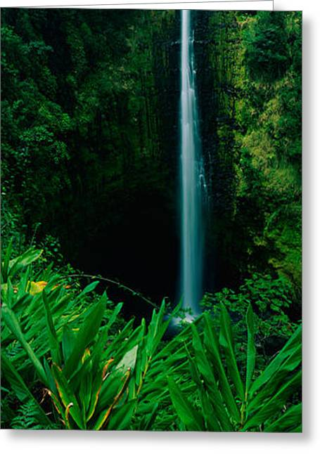This Is Akaka Falls State Park. The Greeting Card by Panoramic Images