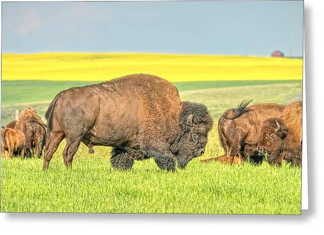 This Is Alberta 3 Greeting Card by Paul W Sharpe Aka Wizard of Wonders