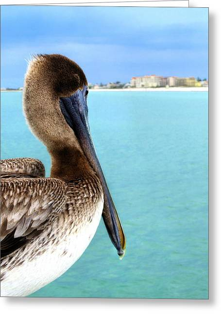 This Is My Town - Pelican At Clearwater Beach Florida  Greeting Card