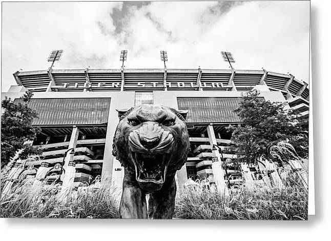 This Is Where The Tigers Play - Bw Greeting Card