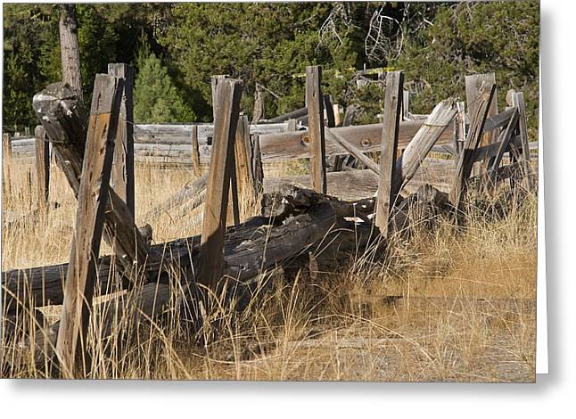 This Old Fence Greeting Card by Charlie Osborn