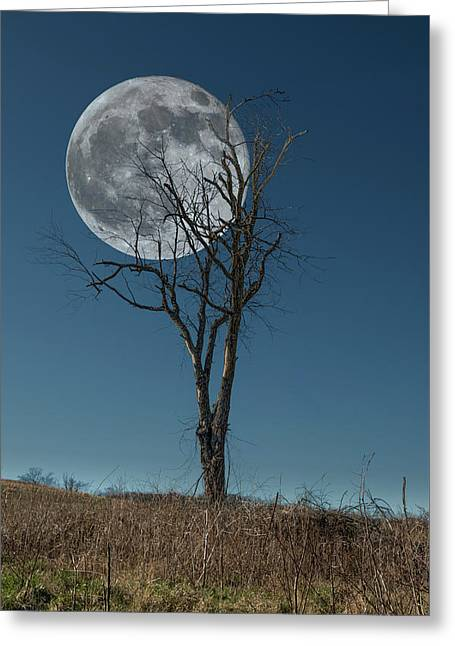 Greeting Card featuring the photograph This Tree Holds The Moon by Joe Sparks