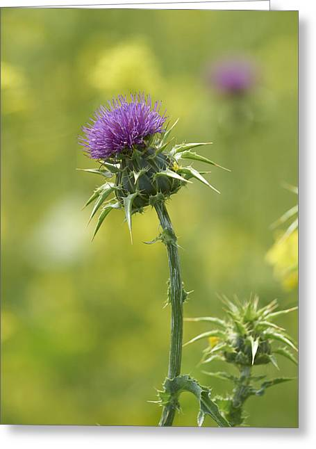 Thistle And Mustard Greeting Card by Doug Herr