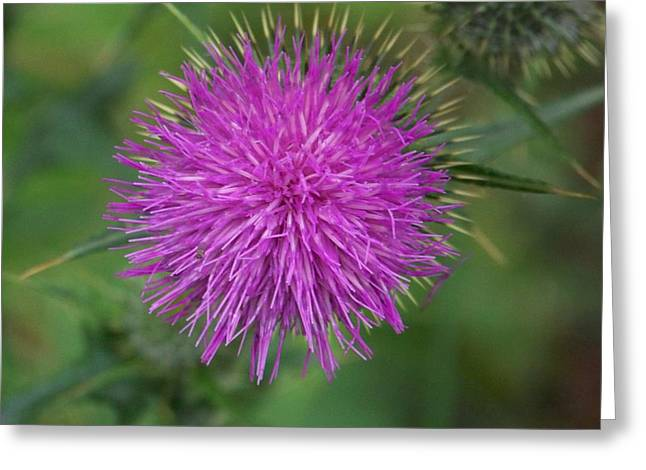 Greeting Card featuring the photograph Thistle by Angi Parks