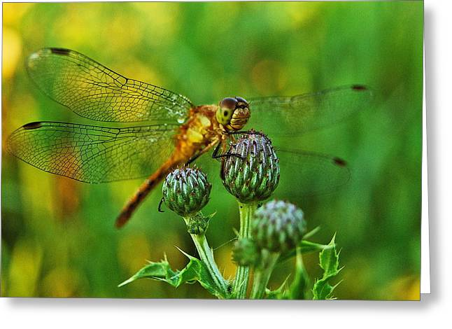 Thistle Dragon Greeting Card by Michael Peychich