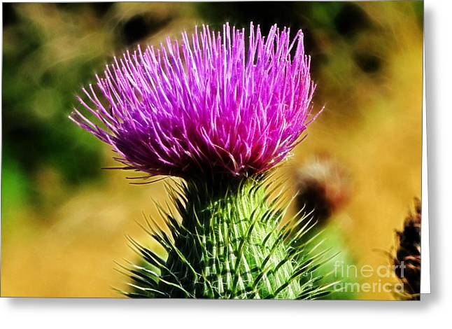 Thistle Greeting Card by Lutz Baar