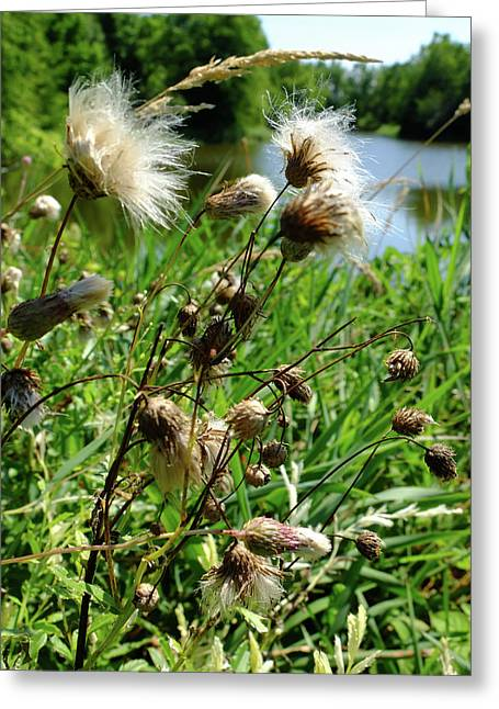 Thistle Greeting Card by Scott Kingery