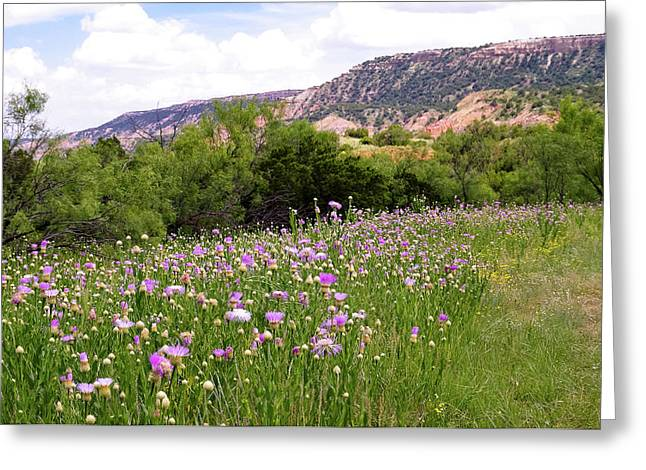 Thistles In The Canyon Greeting Card