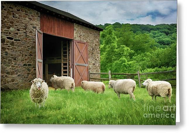 Thompson-neely Farmstead Sheep Greeting Card