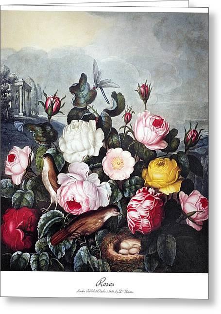 Thornton: Roses Greeting Card
