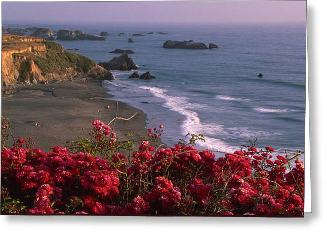 Those North Coast Beaches Greeting Card by Soli Deo Gloria Wilderness And Wildlife Photography