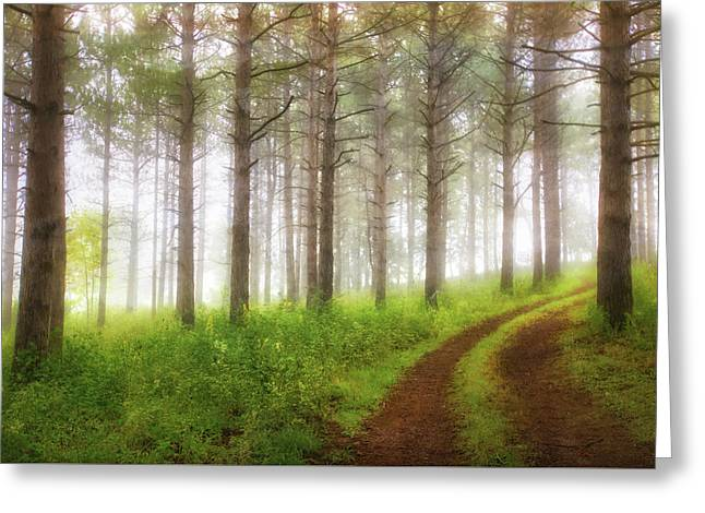 Through The Forest Greeting Card by Jennifer Rondinelli Reilly - Fine Art Photography