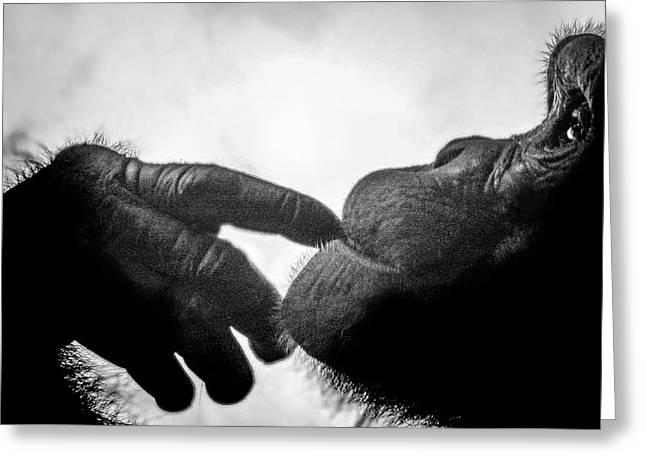 Thoughtful Chimpanzee Greeting Card by Marius Sipa