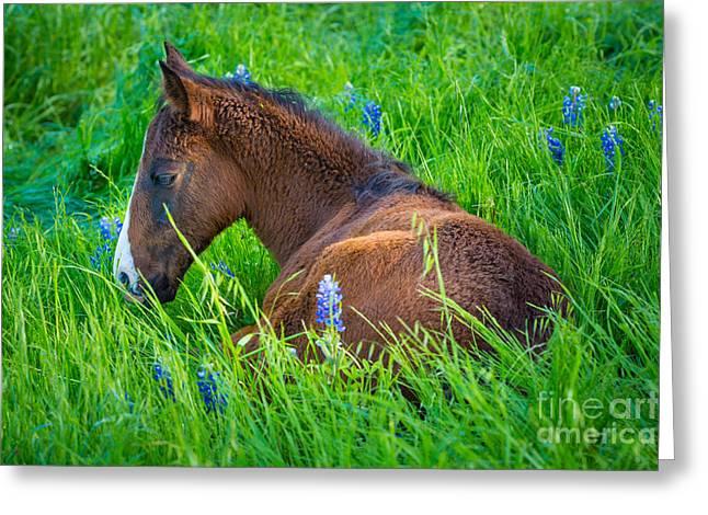 Thoughtful Foal Greeting Card