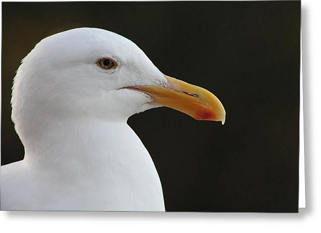 Thoughtful Gull Greeting Card