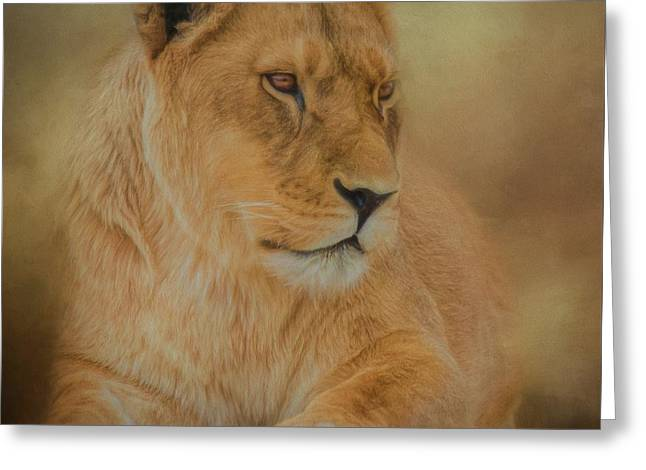 Thoughtful Lioness - Square Greeting Card