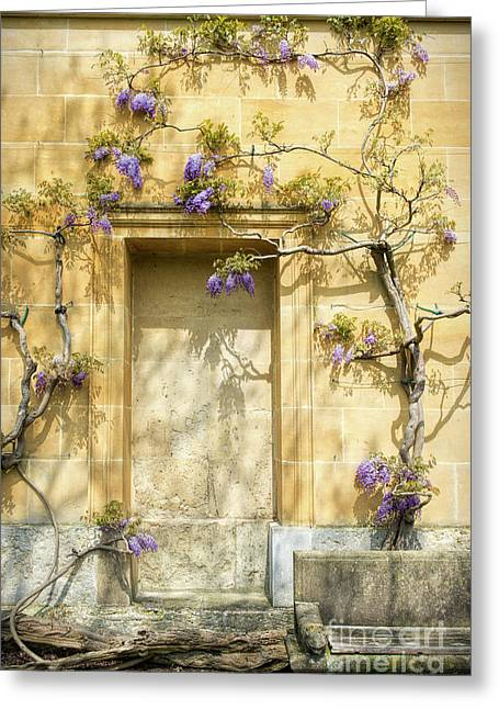 Threads Of Wisteria Greeting Card by Tim Gainey