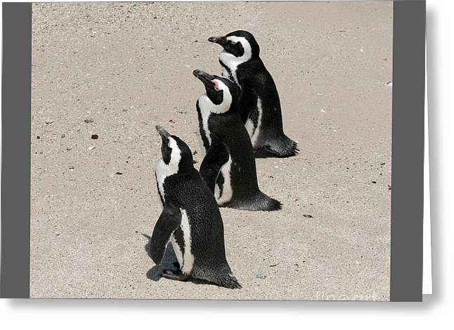 Three African Penguins Greeting Card