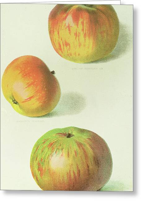 Three Apples Greeting Card by English School
