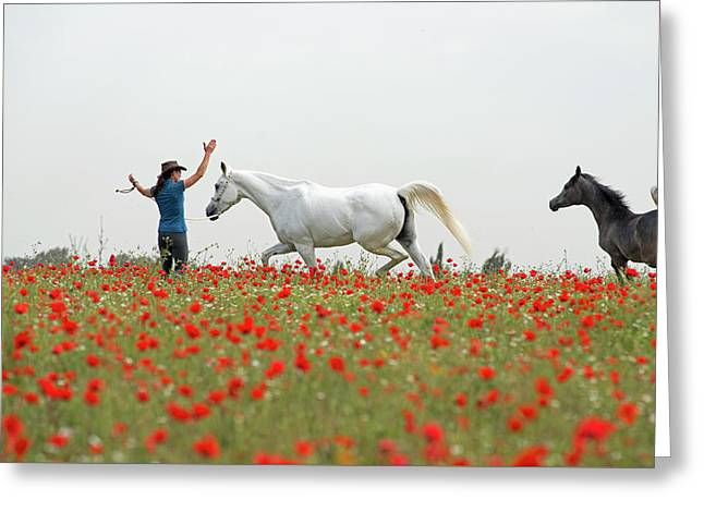 Three At The Poppies' Field Greeting Card