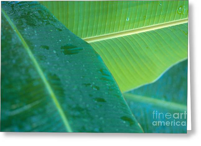 Three Banana Leaves Greeting Card by Dana Edmunds - Printscapes
