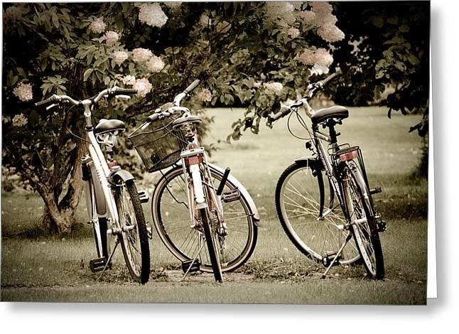 Three Bicycles Greeting Card by Maggie Terlecki