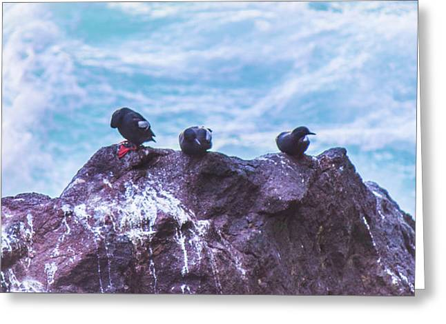 Greeting Card featuring the photograph Three Birds by Jonny D