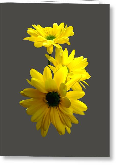 Three Bright Yellow Daisies Greeting Card