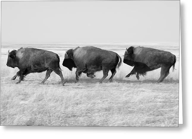 Three Buffalo In Black And White Greeting Card by Todd Klassy