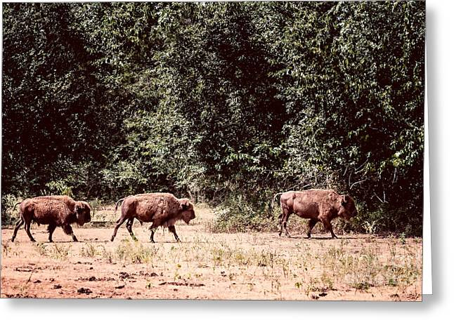 Three Buffalo On The Reserve Greeting Card