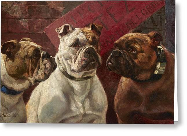 Three Bulldogs Greeting Card