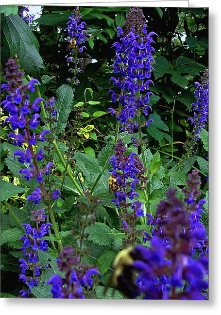Three Bumble Bees And Dephiniums Greeting Card by Martin Morehead