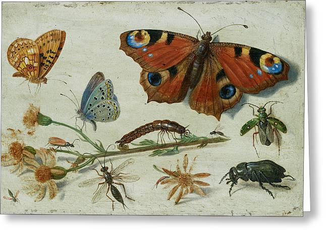 Three Butterflies, A Beetle And Other Insects Greeting Card