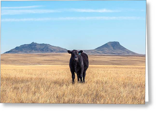 Three Buttes Steer Greeting Card by Todd Klassy