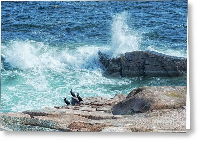 Three Cormorants At Monument Cove, Acadia National Park Greeting Card
