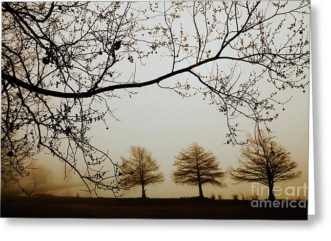 Greeting Card featuring the photograph Three Cypress In The Mist by Iris Greenwell