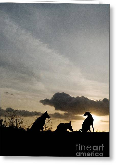 Three Dogs At Sunset Greeting Card