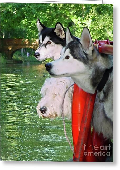 Three Dogs On A Boat Greeting Card by Terri Waters